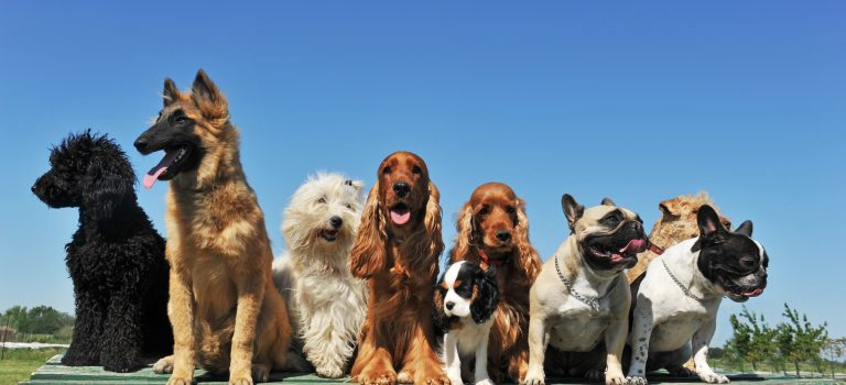 dog training made easy for you
