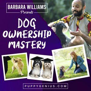 Compulory Puppy Training